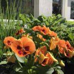 Blüten– und Pflanzenpracht im Maranatha
